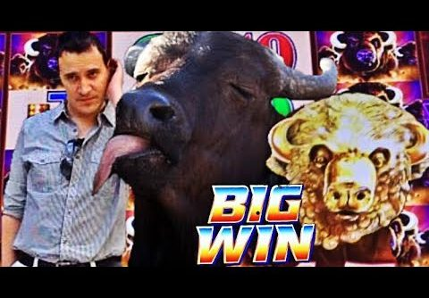 😍 BUFFALO LOVES ME! 😂  BUFFALO GOLD slot machine SUPER BIG WINS!