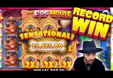 ROSHTEIN €93.000 RECORD WIN on The Dog House – New Record Win