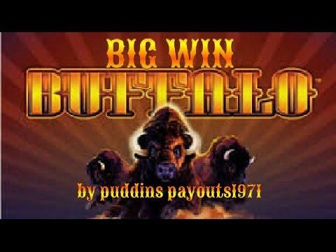 BUFFALO SLOT MACHINE BIG WIN!