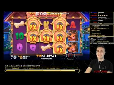 New  Record win The Dog House slot