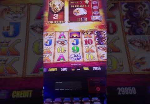 ☆AMAZING RUN☆ MY BIGGEST WIN ON BUFFALO GOLD | SLOT TRAVELER!