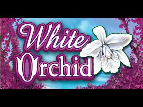 MEGA WIN!!! Re-trigger on White Orchid bonus!!! Hi limit slot!!