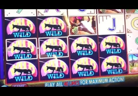 ** Super Big Win ** Coyote Moon n Others ** SLOT LOVER