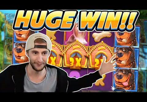 HUGE WIN! Dog House Big win – Online Slot from Casinodaddy Live Stream