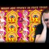 Streamer Insane New Big Win on Dog House slot – TOP 5 Biggest wins of the week