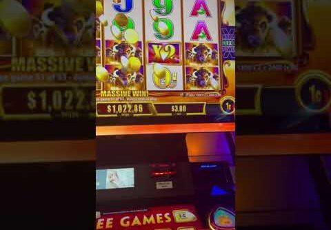 Buffalo Gold massive win #slot #buffalo #bigwin #casino